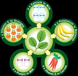 Moringa - Gesundheit - Naehrstoffgehalt - Plan Verde e.V.
