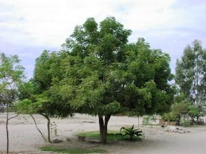 Neembaum-6-Jahre-Plan-Verde-e.V.