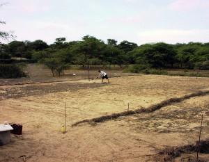 Plan-Verde-erstes-Land---Baumschule
