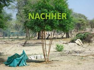 Piura-Neem-Busch-nachher-Plan-Verde-e.V