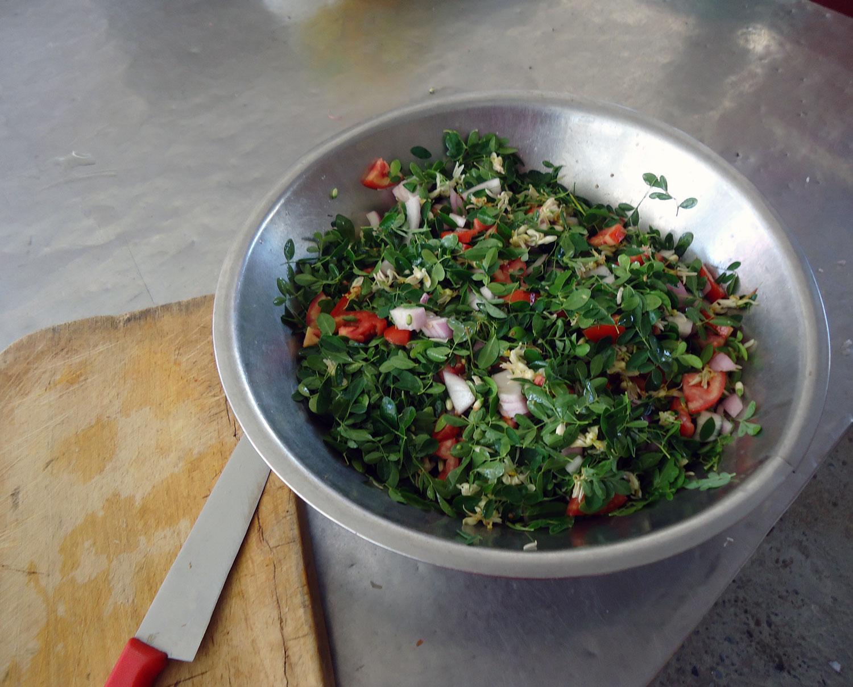 Moringa-Salat-Plan-Verde-e.V.