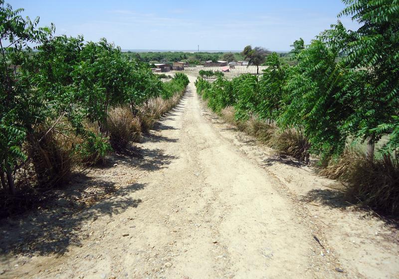 Neem-Allee-Mariposa-Plan-Verde-e.V.
