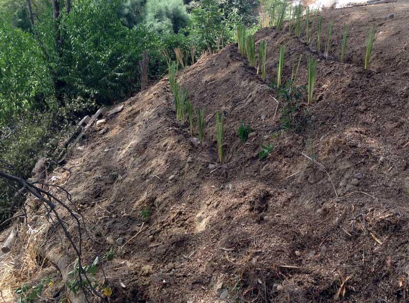 Hang-Absicherung-Vetiver-Gras-Plan-Verde-e.V.